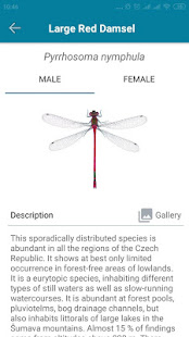 Dragonfly Hunter CZ