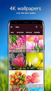 Tulip Wallpapers 4K  For Pc, Windows 7/8/10 And Mac – Free Download 2021 1