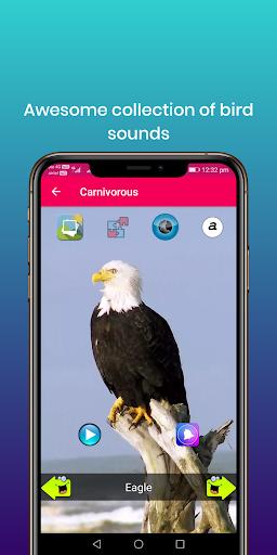 100 bird sounds : ringtones, wallpapers screenshot 3