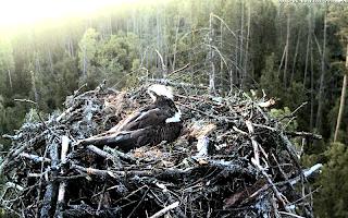 Nature Cameras