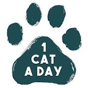 1 Cat a Day