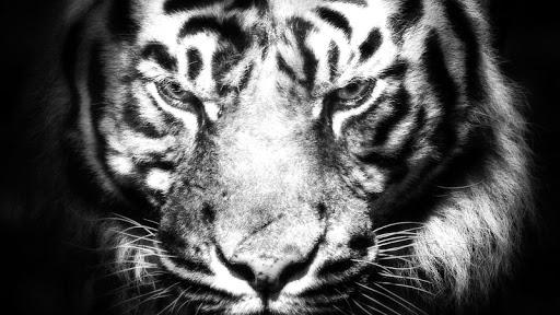 Free Beast Wallpaper FHD (Lion, Tiger, Wolf, etc) screenshots 3