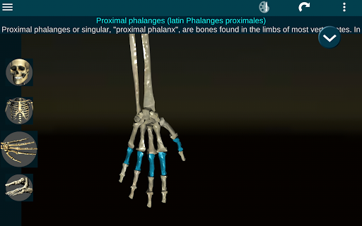 Osseous System in 3D (Anatomy) 2.0.3 Screenshots 11