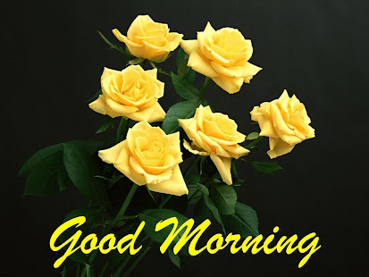 Good morning Flower Wallpapers Colorful Roses 4K 12.1.6 Screenshots 10