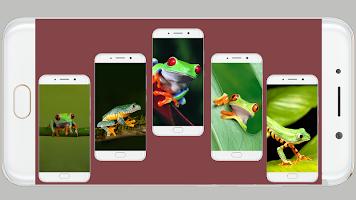 Frog Wallpaper 4K