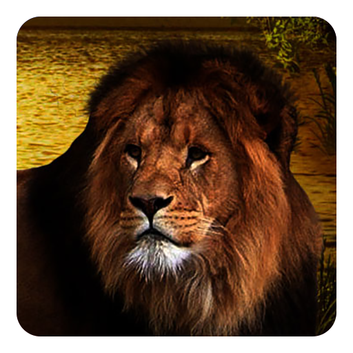 Lions Live Wallpaper Apps On Google Play