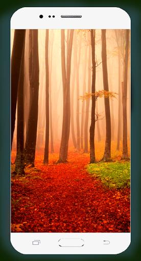 Forest Wallpaper HD Screenshots 4