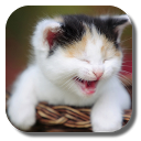 Funny Cat Live Wallpaper