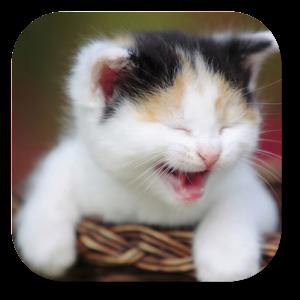 Funny Cat Live Wallpaper