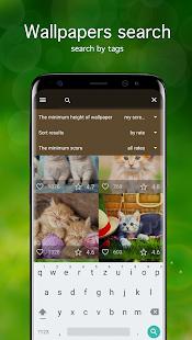 Kitten Wallpapers 4K