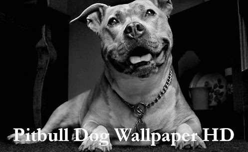Pitbull Dog Wallpaper HD 1