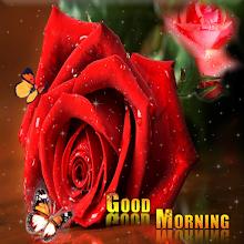 Good morning Flower Colorful Roses 4K Download on Windows