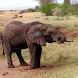 Tanzania Travel Safari Guide