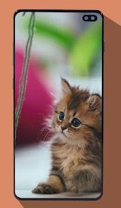 Kitten Wallpapers 5