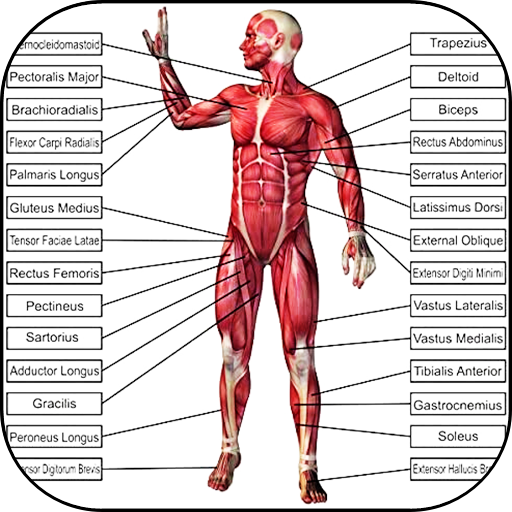 Baixar 3D Human Anatomy. 👭Discover the Human Body para Android