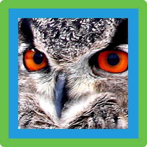 Aves De España Apps En Google Play