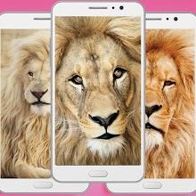 Lion Face Wallpaper - Animal Backgrounds Wallpaper Download on Windows