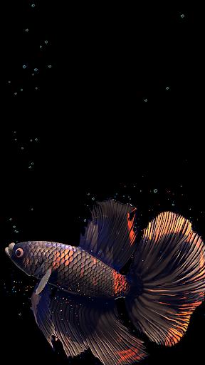 Betta Fish Live Wallpaper FREE 1.4 Screenshots 8