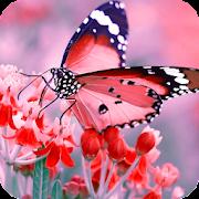 Butterfly Wallpaper Best HD