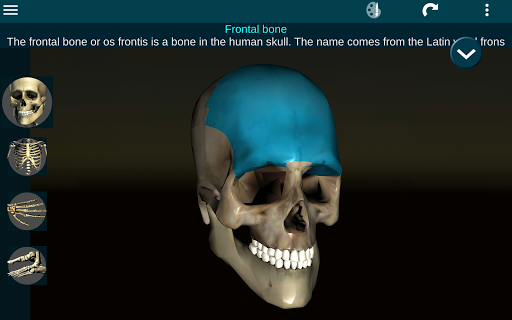 Osseous System in 3D (Anatomy) 2.0.3 Screenshots 9