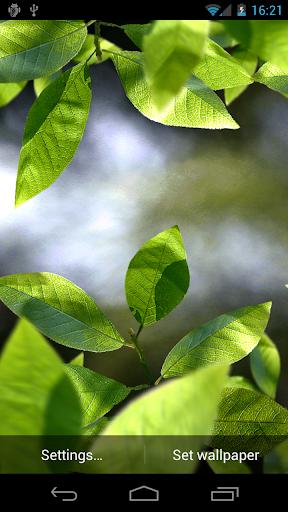 Fresh Leaves  screenshots 1