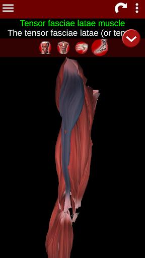 Muscular System 3D (anatomy) 2.0.8 Screenshots 4