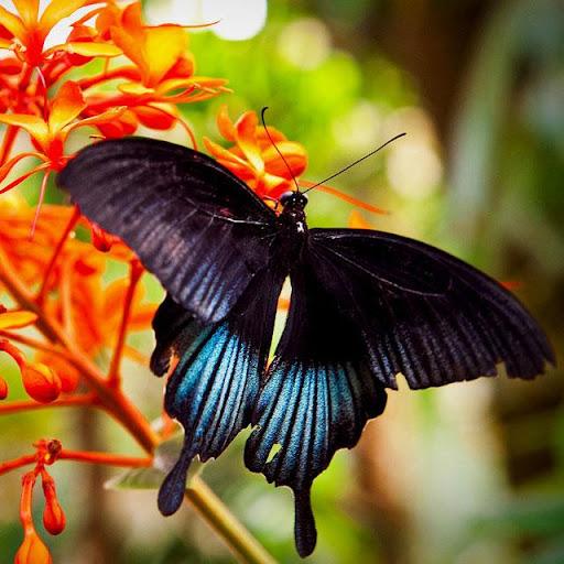 Butterflies Jigsaw Puzzles apklade screenshots 1