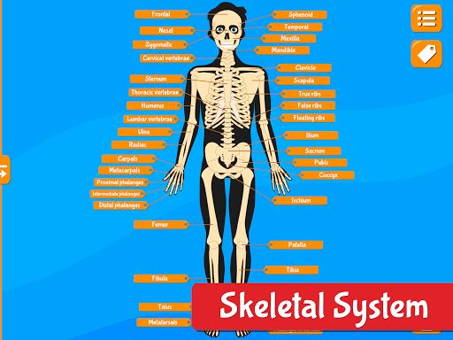 Anatomix - Human Anatomy screenshots 12