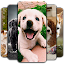 Puppy Wallpaper 🐶