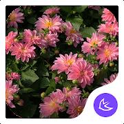 Flowers|APUS Launcher theme