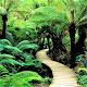 Beautiful Nature Wallpaper HD Download for PC Windows 10/8/7