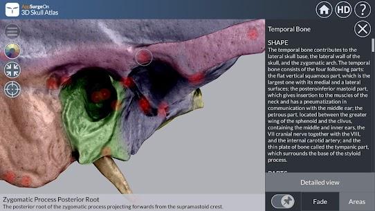 3D Skull Atlas 2