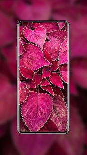 4K Wallpapers - HD & QHD Backgrounds screenshots 16