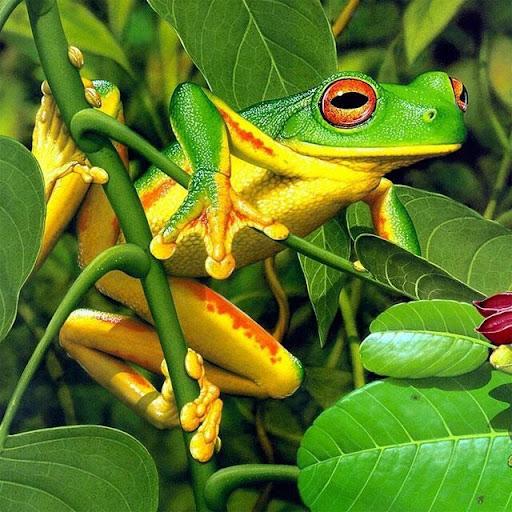 Frogs Jigsaw Puzzles  screenshots 12