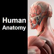 Human Anatomy Quiz