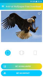 Animal Wallpaper Free Download