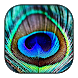 Peacock Wallpaper - Androidアプリ
