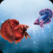 Betta Fish Wallpaper Best HD