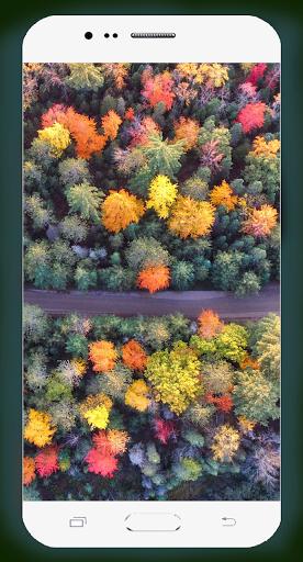 Forest Wallpaper HD Screenshots 12