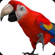 Talking Parrot 2