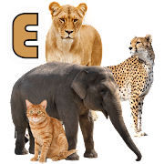 Learn Animals Name Animal Sounds Animals Pictures
