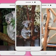 Koala Wallpaper Apk - Cool Backgrounds Wallpaper Download on Windows