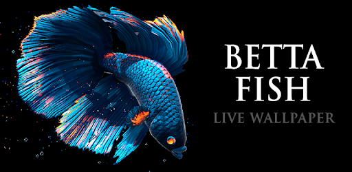 Betta Fish Live Wallpaper Free By Maxelus Net More Detailed Information Than App Store Google Play By Appgrooves Personalization 7 Similar Apps 6 Review Highlights 24 702 Reviews