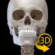 骨格   解剖学3D アトラス