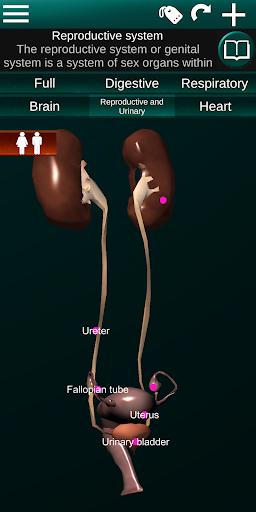 Internal Organs in 3D (Anatomy) 2.5 Screenshots 6