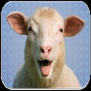 Sheep Sounds