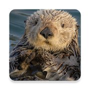 Top 32 Lifestyle Apps Like Sea Otter Sound Collections ~ Sclip.app - Best Alternatives