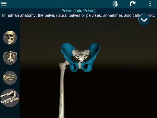 Osseous System in 3D (Anatomy) 2.0.3 Screenshots 23