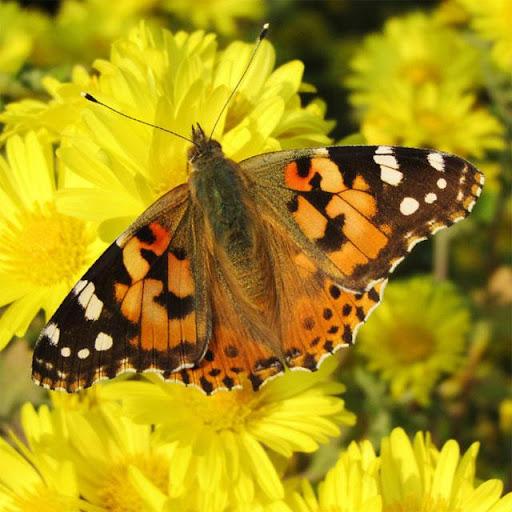 Butterflies Jigsaw Puzzles apklade screenshots 2
