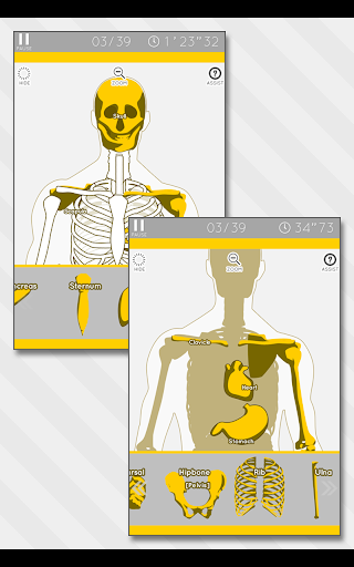 Enjoy Learning Anatomy puzzle 3.2.3 screenshots 12